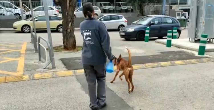 Paseo animales Refugio Municipal Paterna
