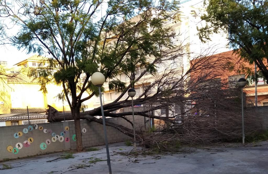árbol caído Alfafar