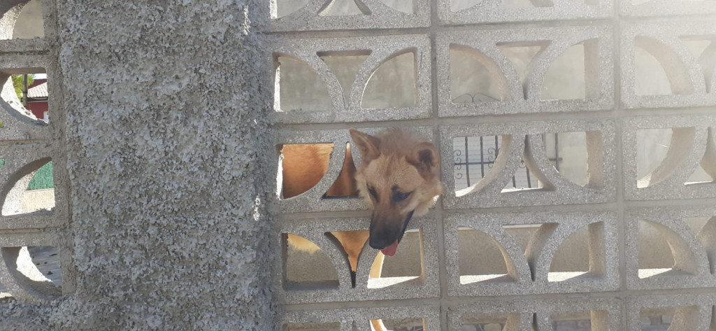 Perro atrapado Picassent