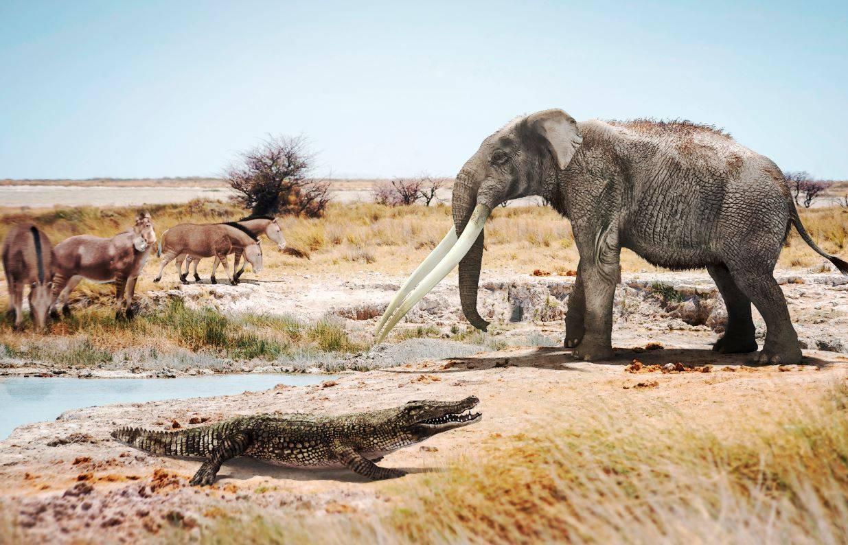 Un cocodrilo junto a un mastodonte del género Anancus y caballos primitivos del género Hipparion en un ambiente similar a lo que pudo ser Valencia hace seis millones de años. / José Antonio Peñas (SINC)