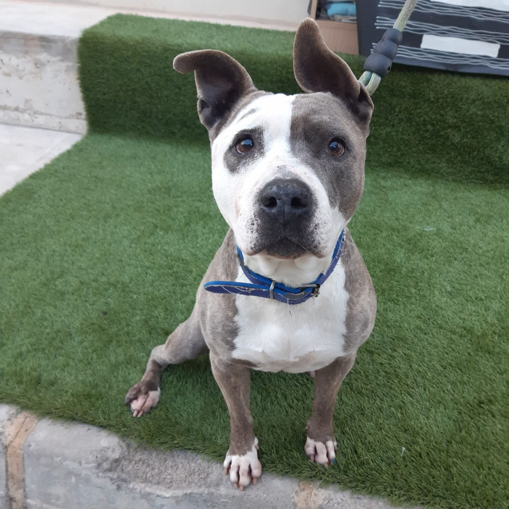 web adopciones refugio animales Paterna