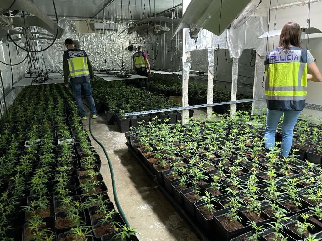 plantacion marihuana Torrent