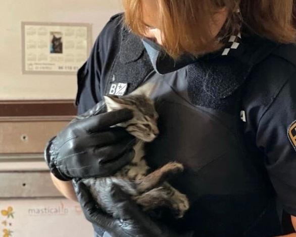 Policia Local Alaquas rescate gatos