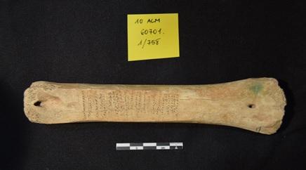Metatarso de vacuno de la Almoina, de época islámica, utilizado como yunque para afilar hoces metálicas
