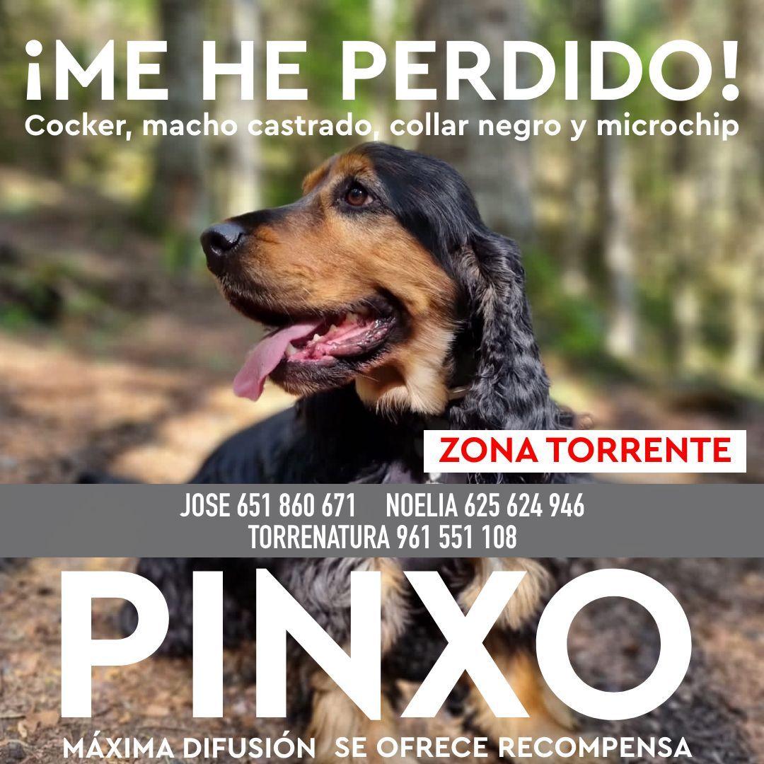 perro desaparecido Torrent