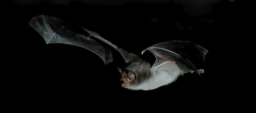 noche de los murciélagos