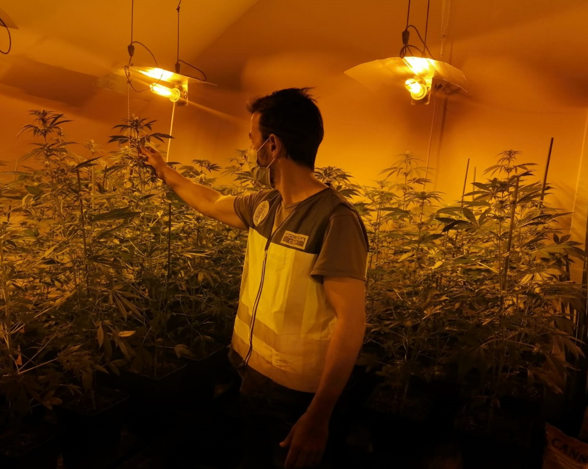 marihuana Sedaví